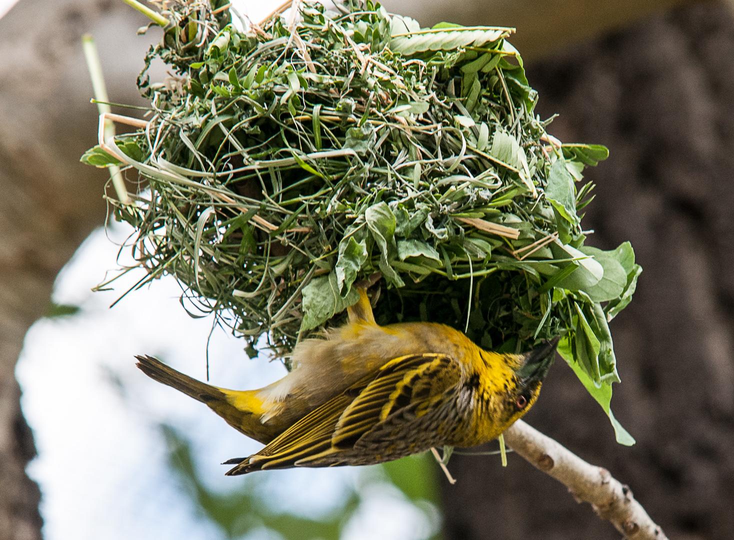 Vogel im Netz