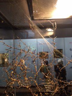 Natur: Spinne