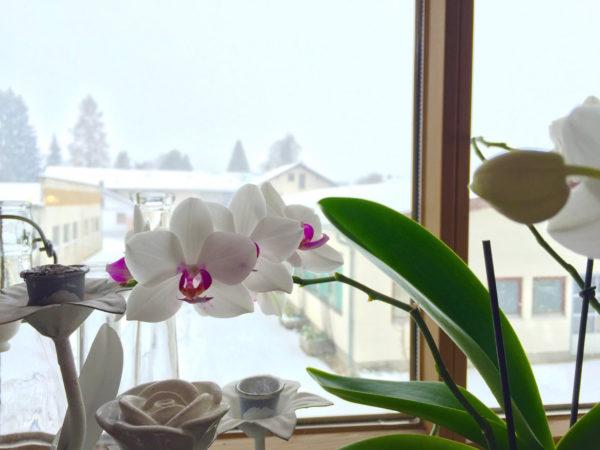 Schnee im Alpenvorland trotz globaler Erwärmung