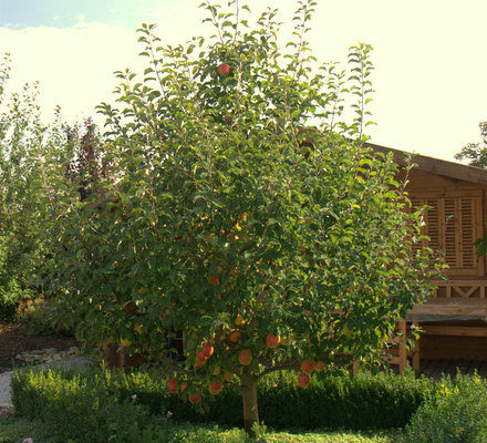 Einfach phantastisch! Neues Leben entsteht  – Apfelbaum