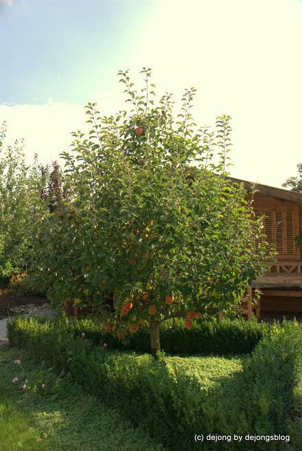 Unser Apfelbaum und seine roten Äpfel
