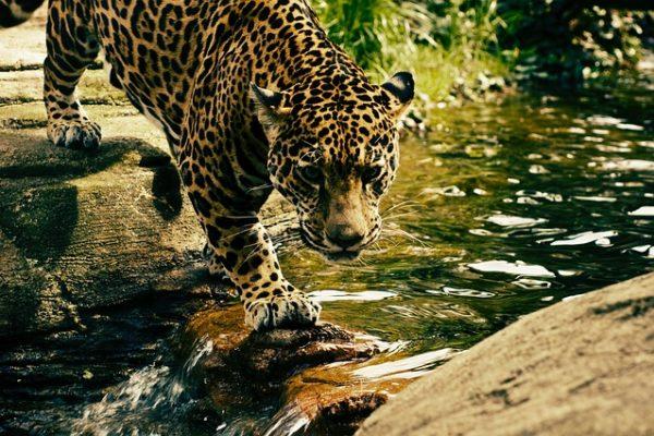 Leopard küsst Maus oder ein Ort zum Träumen, der Realität wird