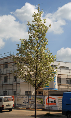 Baustelle und Baum
