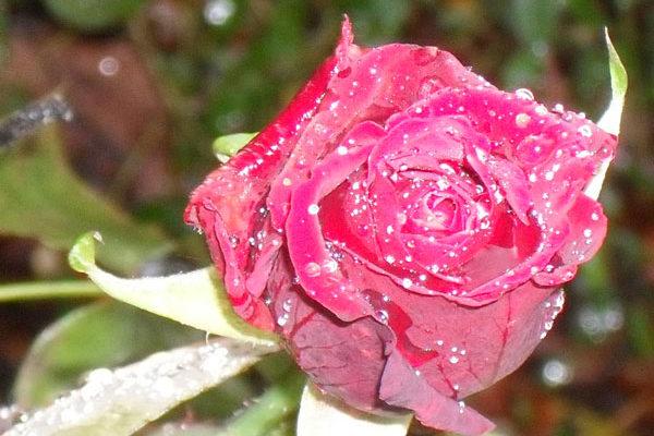 Freude in Rot