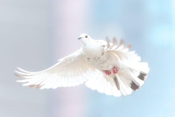 Um des lieben Frieden willens