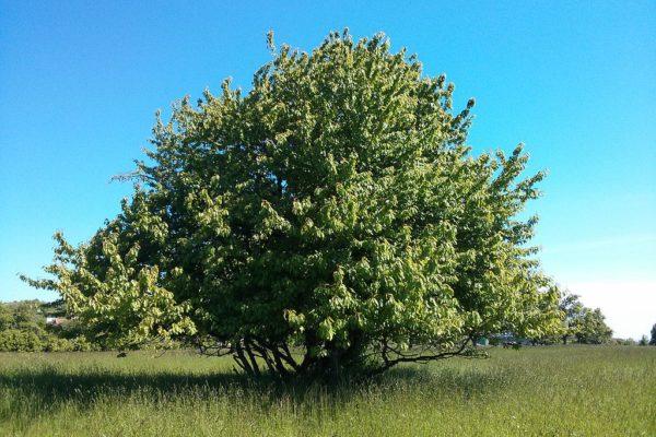 Baume mit WLAN-Signal