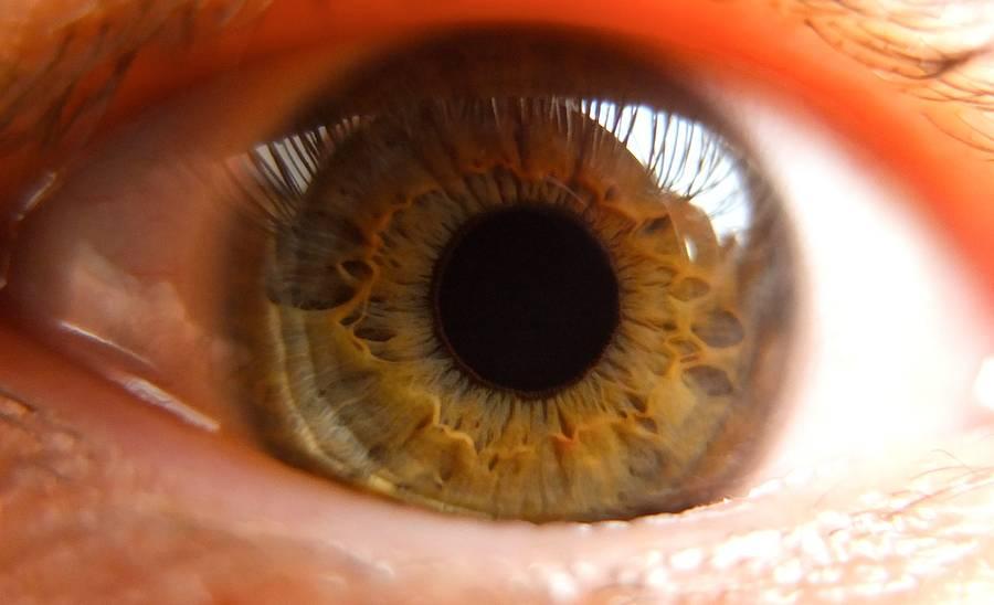 Das Auge. Ein echtes Wunder.