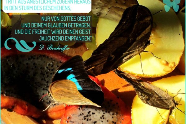 Der Schmetterling in dir