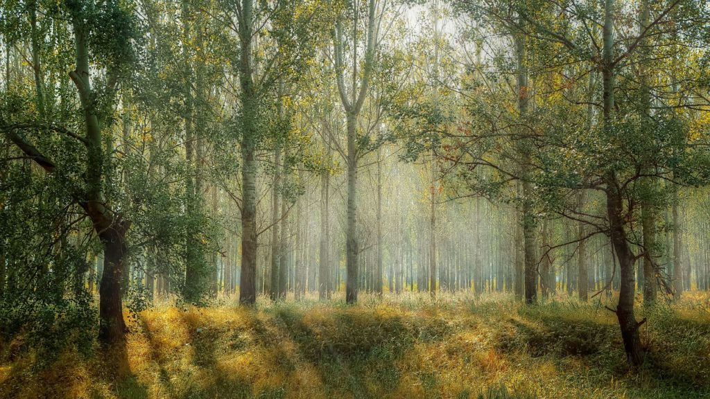 Land der Ruhe, grüner Wald