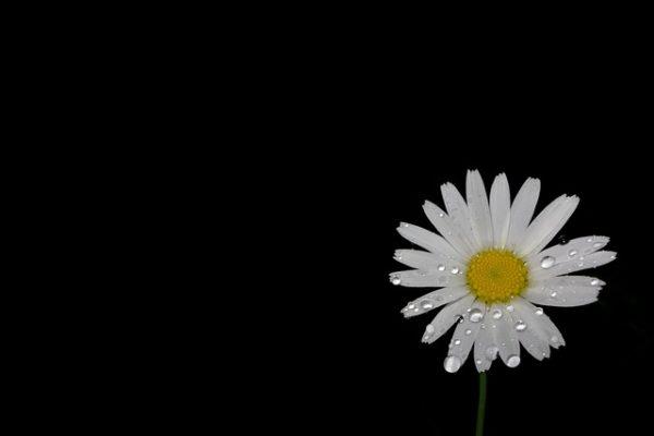 Trauer – wenn Worte fehlen